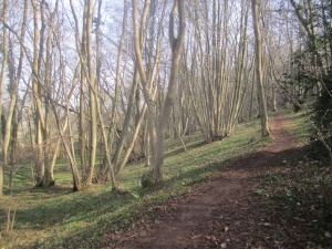 Norton's Wood in March
