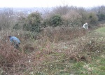 bramble control on Church Hill