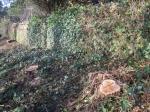 Green Gate stumps cut