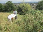 weeding beside bramble patch