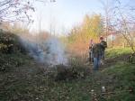 burning brash after coppicing