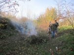 burning brash after coppicing