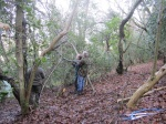 coppicing 15 Jan