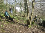 Coppicing in the sushine