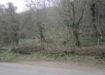 hedge laid
