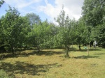 orchard 14 Aug 2014