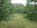 orchard 16 July 14