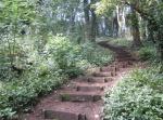 Salthouse Wood steps