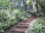 Salthouse Wood steps