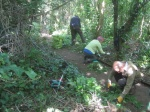 weeding sycamore seedling