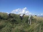 Wain's Hill nettle pulling