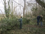gapping up with holm oak brash