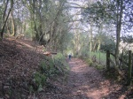 Norton's Wood bridleway
