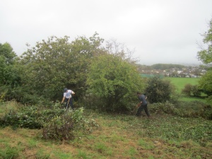 scrub cutting around specimen trees on the south-east facing slope