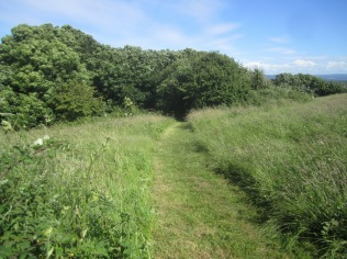 1923 path (northern section) mown