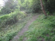 nettles cleared back from the zigzag path