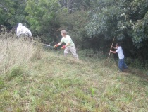 scything, raking and removing cut material