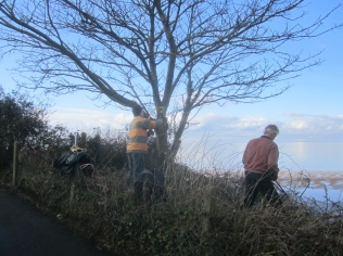 taking down a sycamore that obstructs the old view point