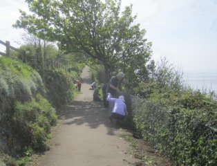 tidying the coastal path
