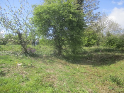 a recently scrub-cut area cleared of invasive species