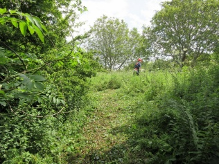 creating access to the grassland and walnut trees