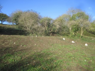 scrub-above-the-lime-kiln-track-will-be-retained-as-a-thicket