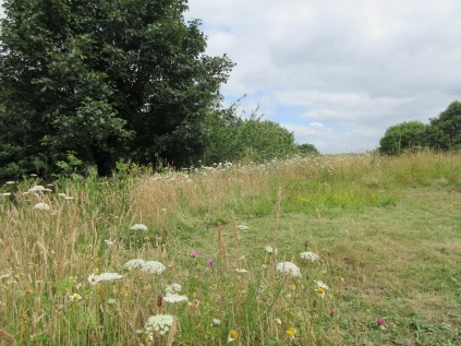 wild flowers thrive in grassland while the area to the right is kept mown to surpress non-native everlasting sweetpea