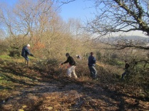 bramble clearing at the top of the slope