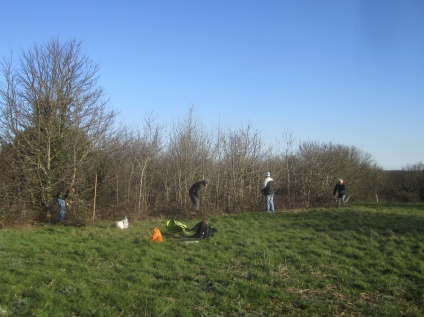 clearing bramble and self-seeded ash