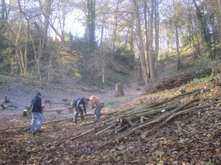 cutting-up-young-felled-sycamore