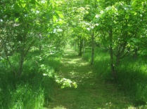 mown paths enhance the wood