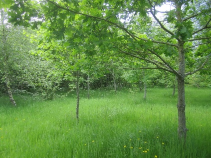 Quinney's Wood in late May