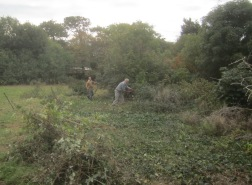 scrub-clearing-on-dial-hill