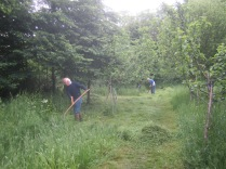 scything the picnic area
