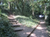 the flight of woodland steps crosses the path