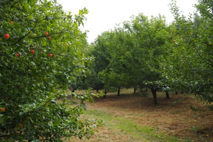 the-orchard-in-october-before-the-apple-harvest-photo-by-david-clegg