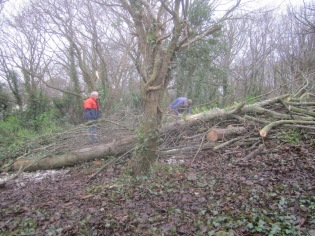 tree-thinning-and-cutting-up