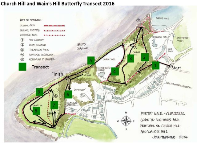Church Hill and Wain's Hill Butterflies Transect 2016