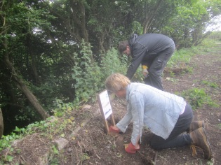 afixing a notice of on-going work and removing nettles from the wall