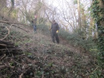 brambles-cut-back-to-further-widen-the-glade