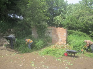 clearing the rubble heaps of nettles before they go to seed