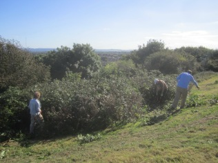 cutting-brambles-and-elder-on-church-hill