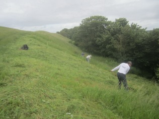 June scything on Wain's Hill