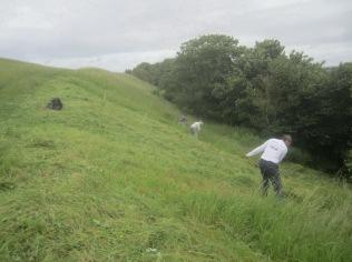 June scything on Wain's Hill