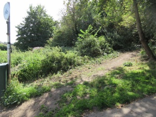nettles pulled to improve access