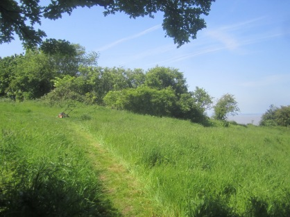 the 1923 path on Church Hill mown this year by petrol mower