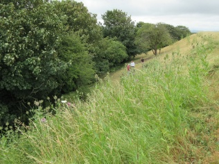 the June scything is complete, leaving a stand of teasle and ploughman's spikenard
