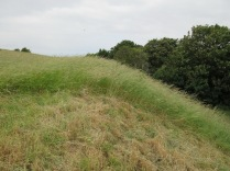 the next section awaiting the scythe; the grassland quality improves year by year