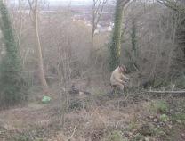 tree-management