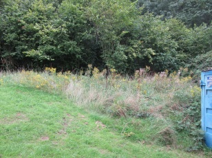 ragwort needs to be pulled before this overgrown corner is brush-cut